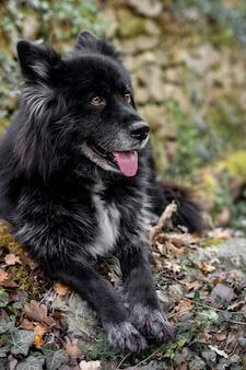 Счастливая собака на природе