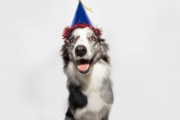 青い誕生日の帽子との幸せな犬のパーティー。孤立した
