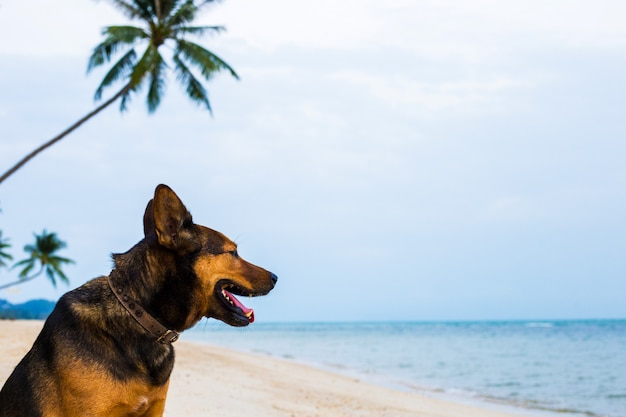A happy dog relaxing on the beach.