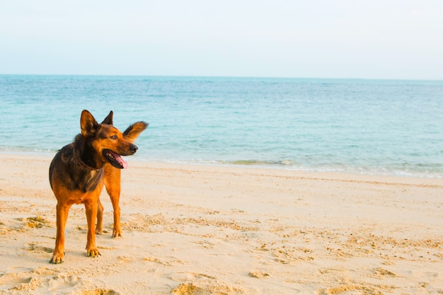 A happy dog relaxing on the beach
