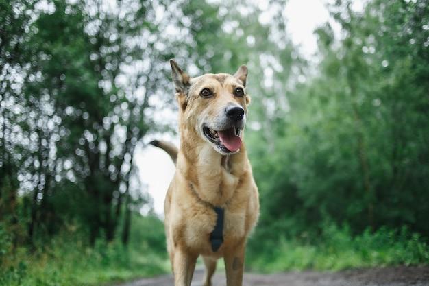 緑の公園のぼやけた背景のパス上の水たまりで走っている幸せな犬