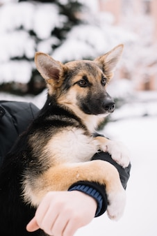 Happy dog sitting on the hands of a man in snow winter