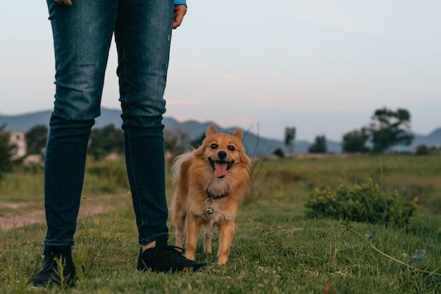 公園で人間の隣に立っている幸せな犬。