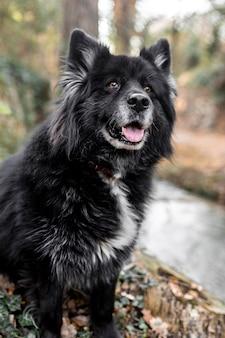 Happy dog in piedi all'aperto