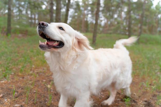屋外を歩く幸せな犬