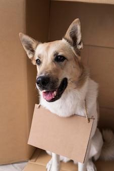 段ボールのバナーを身に着けている幸せな犬