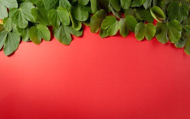 해피 dussehra 녹색 잎과 붉은 배경에 쌀 dussehra 인도 축제 개념