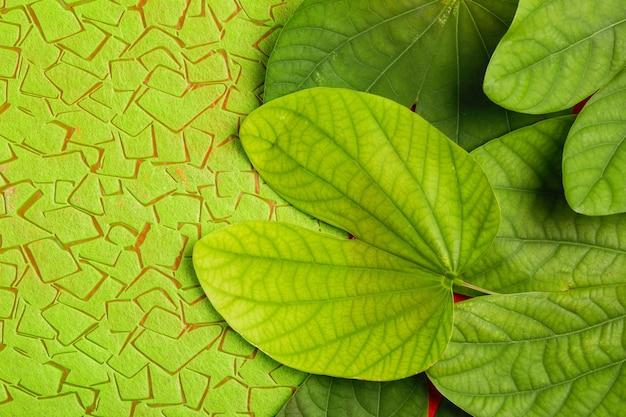 Happy dussehra greeting card, green leaf