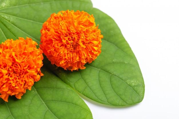 Happy dussehra greeting card , green leaf