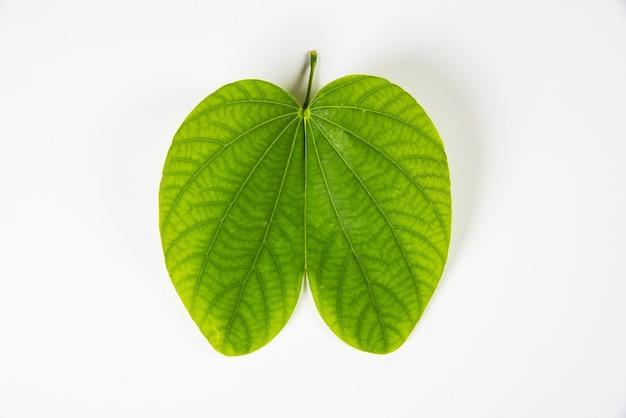 Aptaまたはbauhiniaracemosaまたはbidiの葉を使用したhappydussehraグリーティングカード