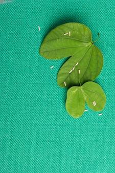 Happy dussehra leaves