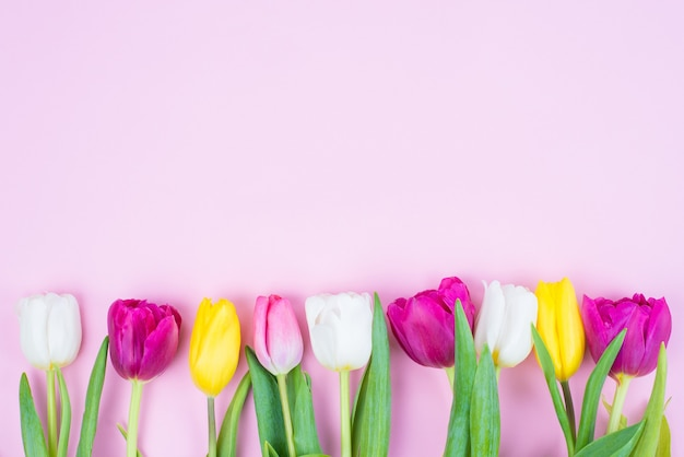 Happy easter concept. top above hing angle view photo of beautiful row of tulips isolated on soft background