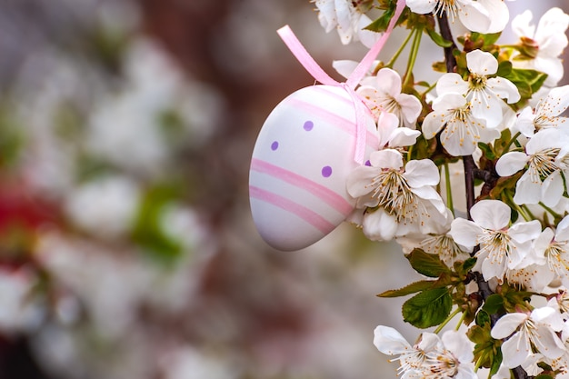 花とあなたのカードの休日の背景と桜の枝に幸せなイースター塗装卵。卵狩り、コピースペース
