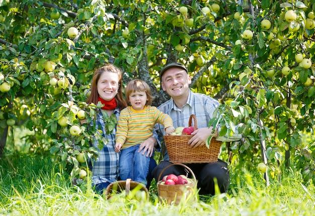 야외 정원에서 사과의 행복한 가족 수확