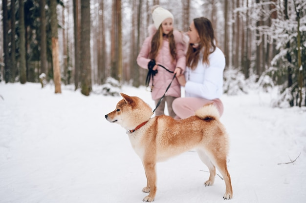 Happy family young mother and little cute girl in pink warm outwear walking having fun with red shiba inu dog in snowy white cold winter forest outdoors