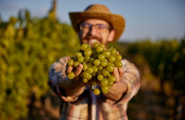 A happy farm man posing with green grapes