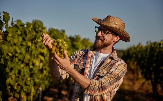 Happy farmer examining ripe grapes