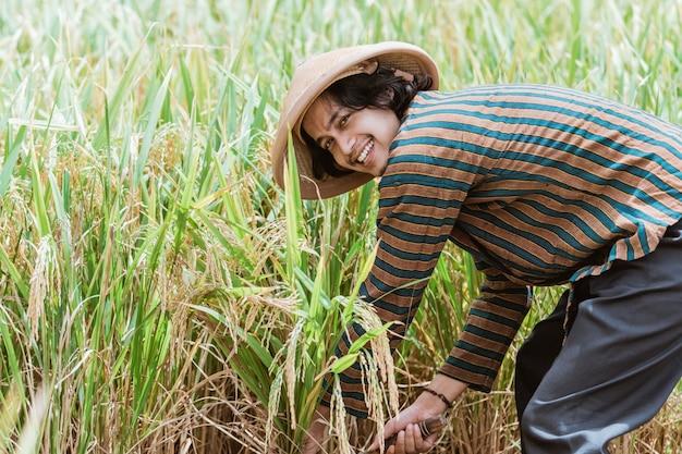 Happy farmer harvest paddy in rice field indonesian