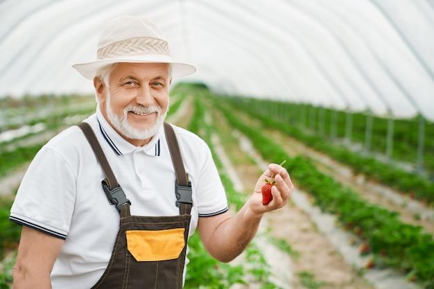 幸せな農夫はイチゴを収穫します
