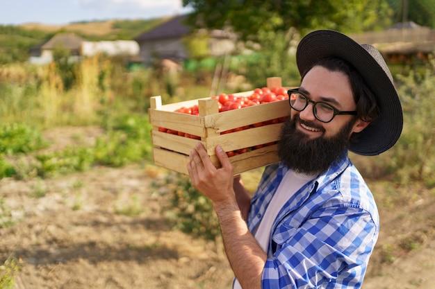 収穫されたエコトマトを持って幸せな農夫が彼の肩に完全な木枠を持って歩いています