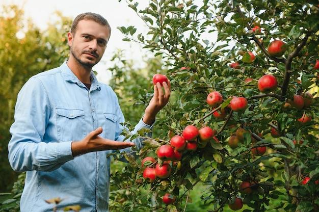 수확 시간에 정원에 있는 사과 나무에서 사과를 따는 행복한 농부