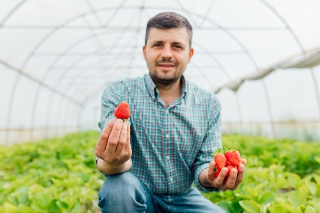 Счастливый фермер, работающий с натуральными органическими фруктами, держащий спелую клубнику в теплице, спелые летние ягоды, урожай клубники, выборочный фокус