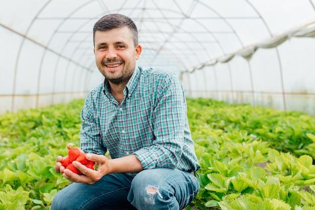 Счастливый фермер, работающий с натуральными органическими фруктами, держит спелую клубнику в теплице, спелые летние ягоды, урожай клубники