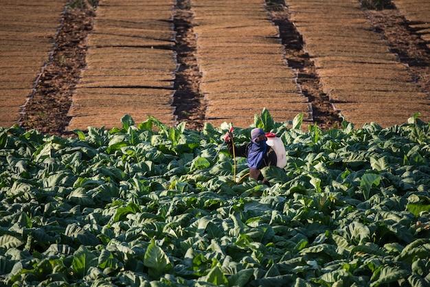 たばこ農場の栽培における幸せな農夫 Premium写真