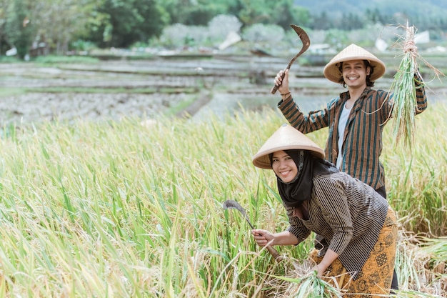 Happy farmers with their hands raised carrying rice plants and sickle while harvesting rice together during the day