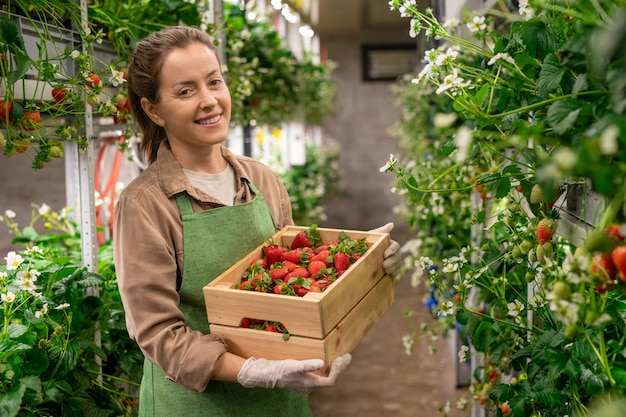 Happy female farmer in apron holding a box of red ripe strawberries