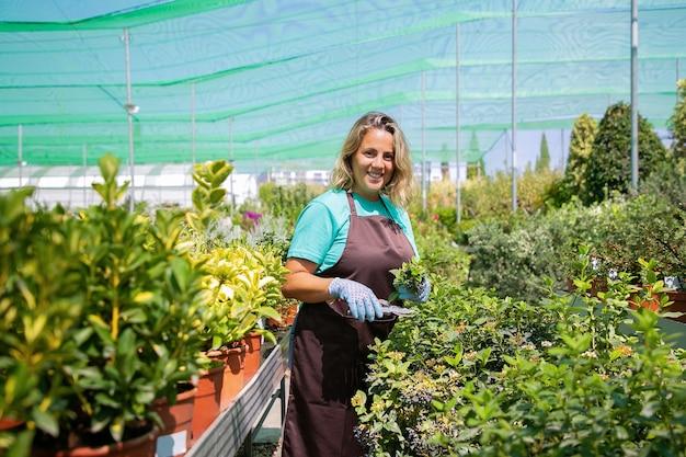 Felice fioraio femmina in piedi tra i filari con piante in vaso in serra, boccola di taglio, tenendo i germogli,