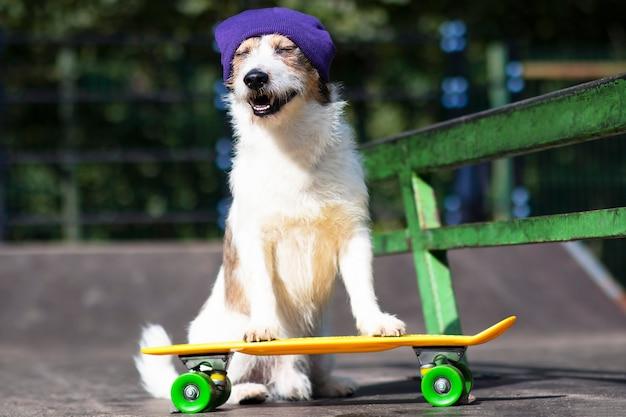 スケートボードやペニーボードに乗って帽子をかぶった幸せな面白い犬。