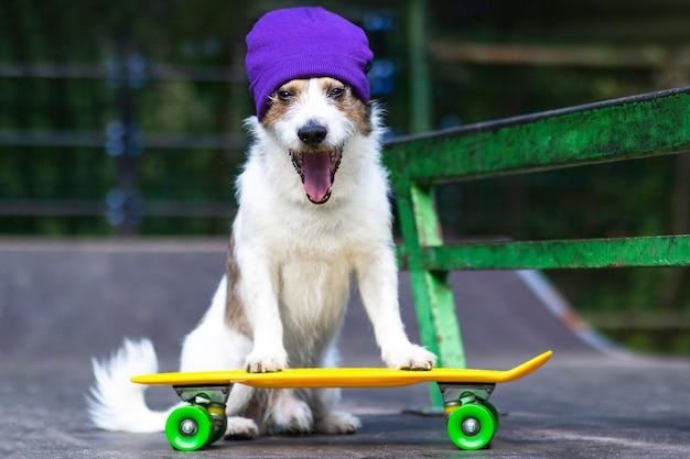 スケートボードやペニーボードに乗って帽子をかぶった幸せな面白い犬。 Premium写真