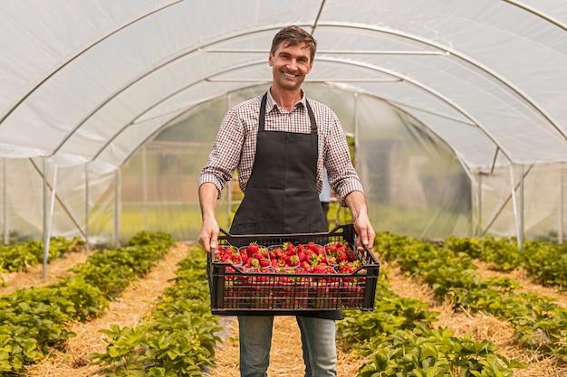 温室でイチゴの木枠を持つ幸せな庭師