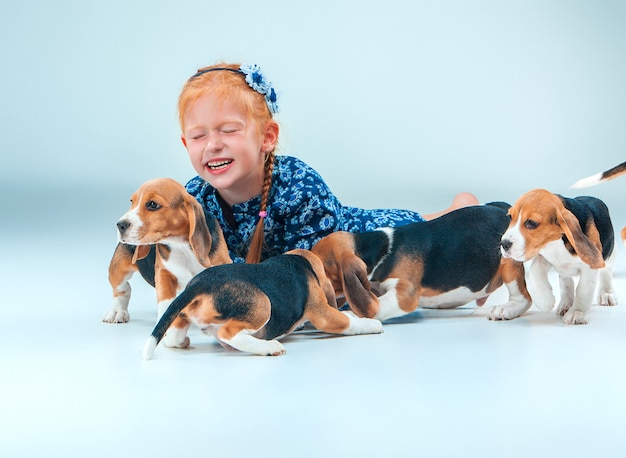 The happy girl and beagle puppys on gray wall