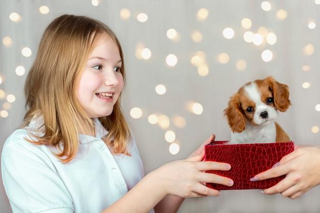 幸せな少女は、ギフトボックスに純血種のかわいい子犬キャバリアキングチャールズスパニエルを受け取った