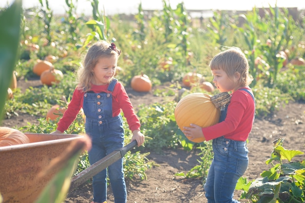 Happy girls with wheelbarrow at field pumpkin patch