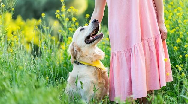 夏の自然の女の子との幸せなゴールデンレトリーバー犬