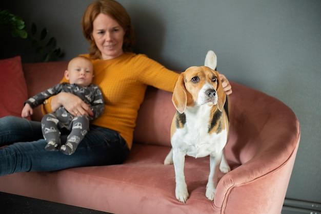 Счастливая бабушка, внук и милая собака породы бигль на диване у себя дома