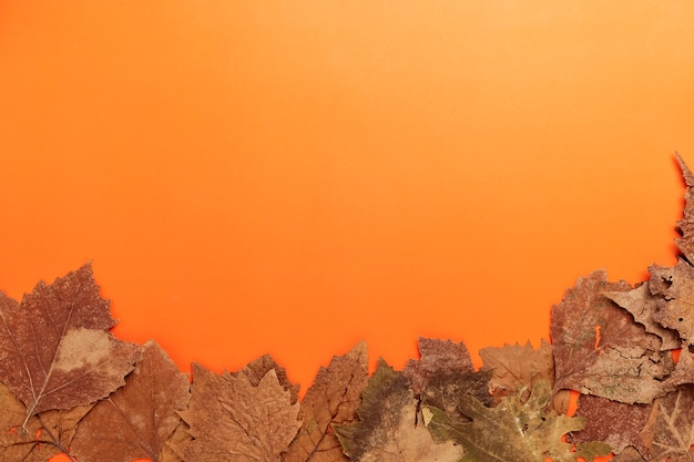ハッピーハロウィン、秋、オレンジ色の背景に乾燥した葉