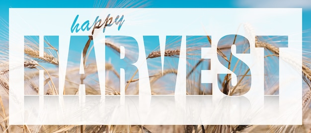 Happy harvest text on white banner against background of wheat.