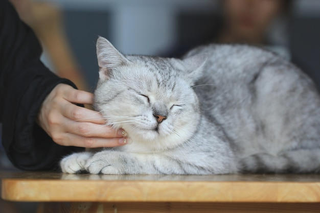 Happy kitten likes being stroked by woman's hand, love for the animals
