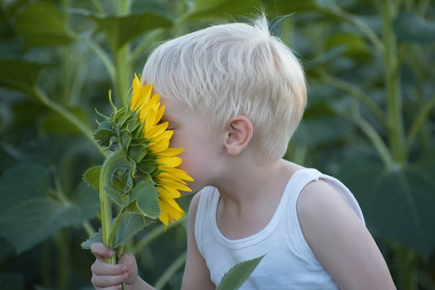 Happy little blond boy sniffing a sunflower flower on a green field. close-up.