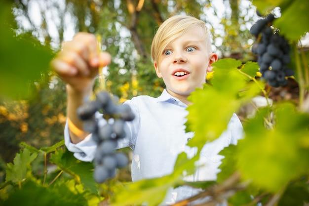 Счастливый маленький мальчик во время сбора винограда в саду