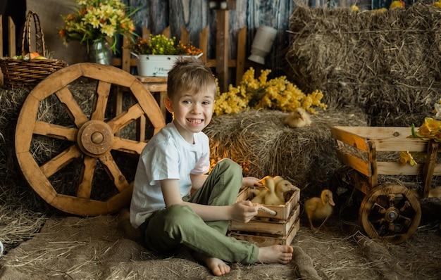 Счастливый маленький мальчик в белой футболке и штанах сидит на соломе с деревянным ящиком с утятами на поверхности стога сена