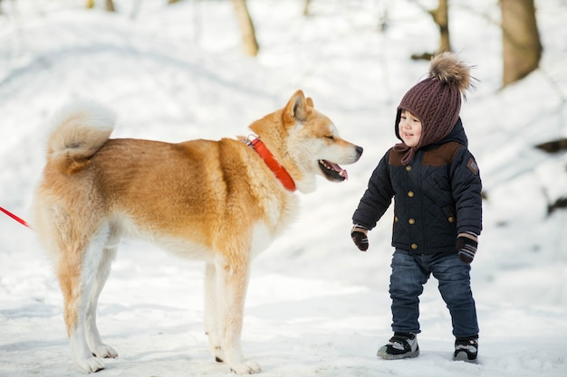 Happy little boy stnads before a akita-inu dog in winter park