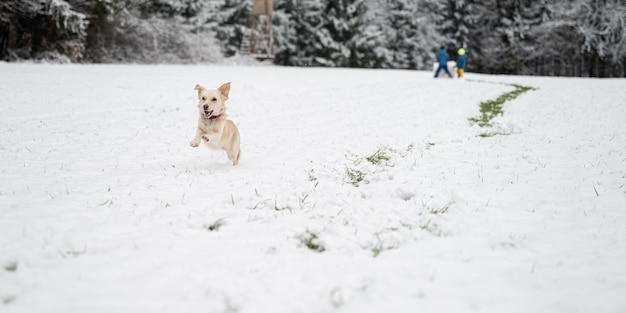 Happy little dog running in the snow with kids playing in background.