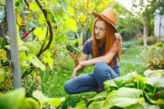 Счастливая маленькая девочка во время сбора огурцов в саду на открытом воздухе любит урожай семейного образа жизни