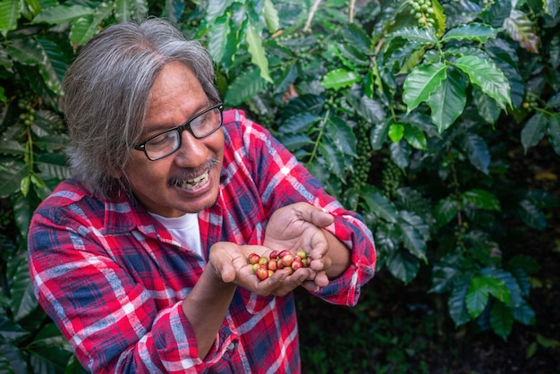 Happy male farmer with coffee berries in his hands on coffee plantation