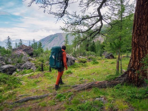 Счастливый турист-мужчина с большим рюкзаком в зеленом горном лесу проходит мимо большого дерева с символическими лентами.